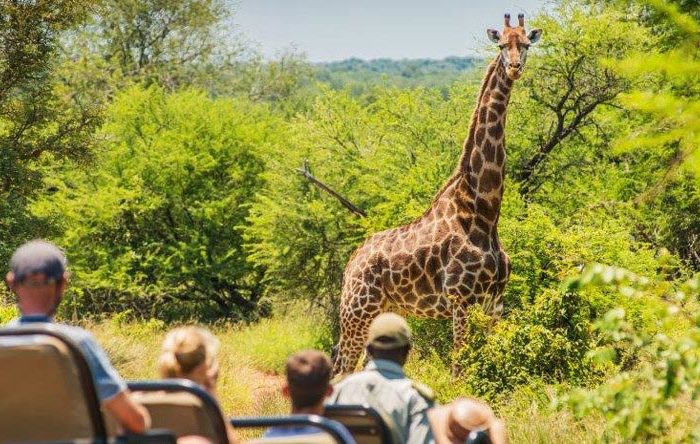 karongwe-private-game-reserve-giraffe