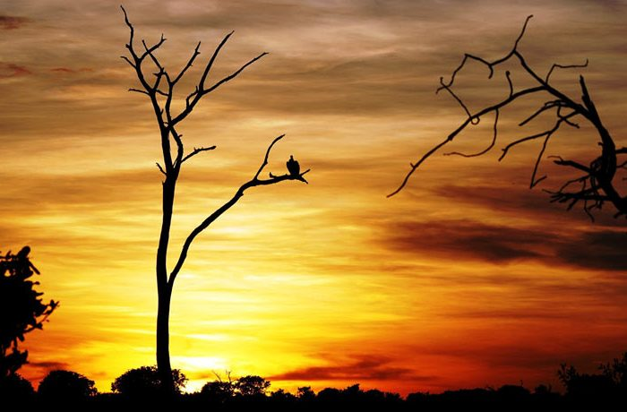 sunrise-near-chobe-game_reserve
