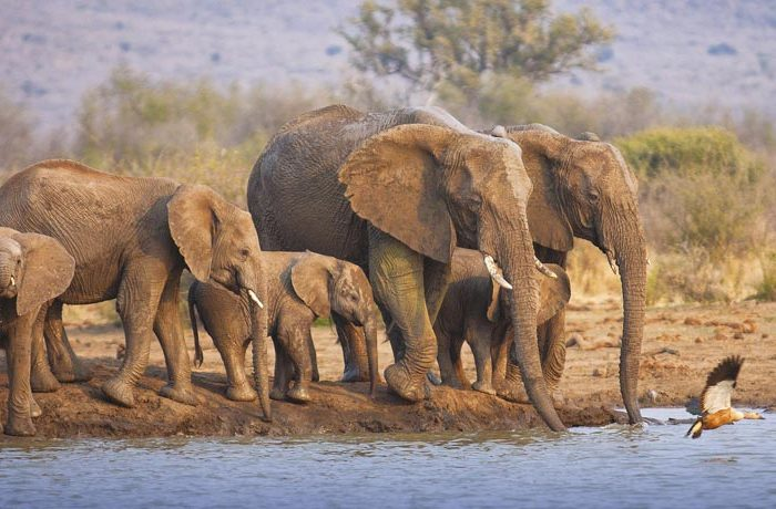 tuningi-wildlife-elephant-waterhole