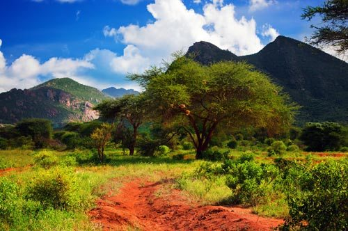 red-ground-road-bush-with-savanna_small